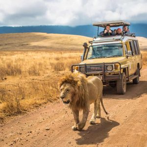 6 Days Shared Safari Tanzania