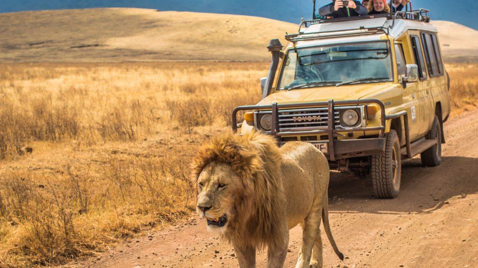 6 Days Shared Safari Tanzania