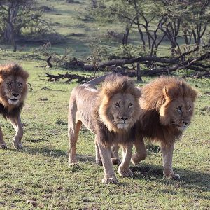 8 Days Tanzania Shared Safari