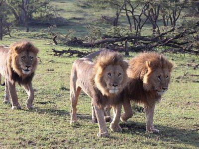 8 Days Tanzania Shared Safari