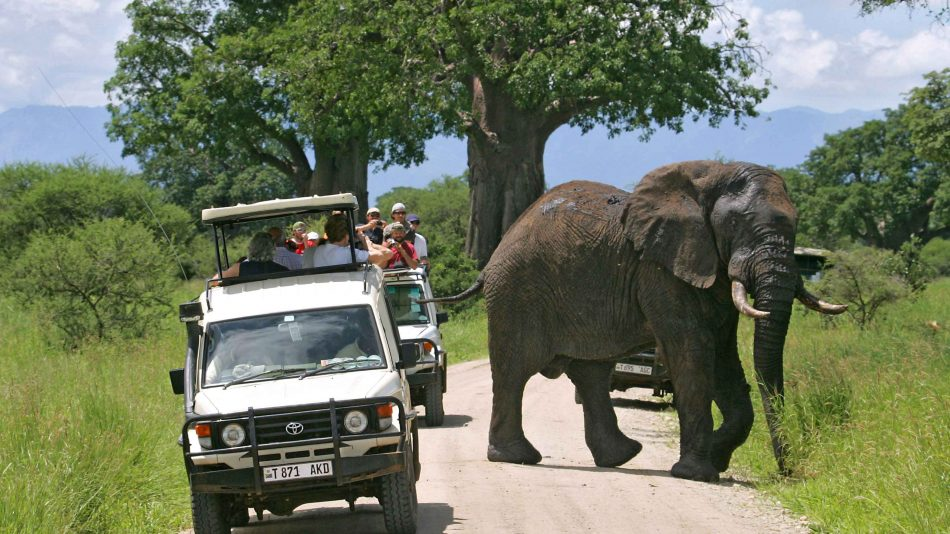 4 Days Tanzania Shared Safari