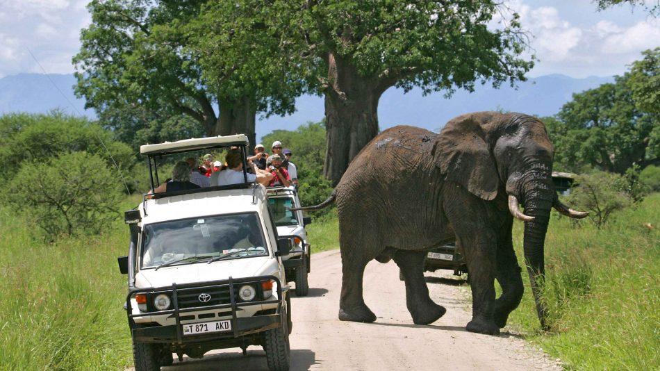4 Days Tanzania Shared Safari