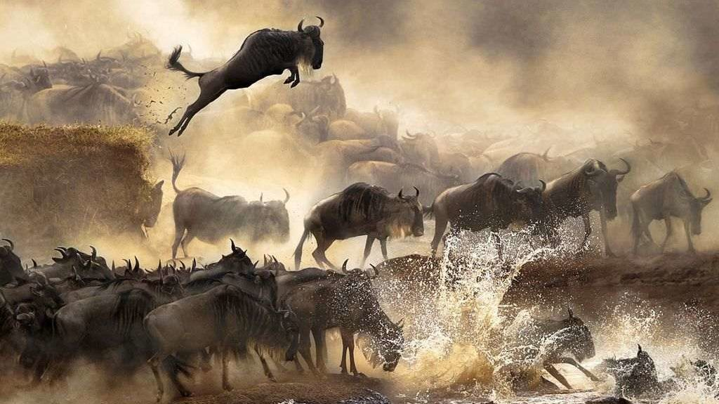 migration-wildebeests-Serengeti