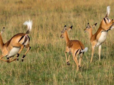 5 Days Ngorongoro & Serengeti Safari