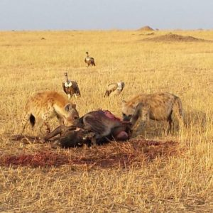 6 Days Tanzania Budget Camping Safari