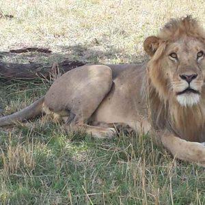 6 Day Tanzania Lodge Safari