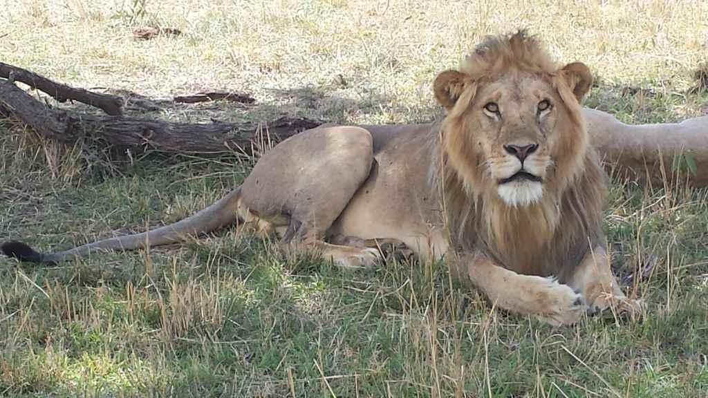 6 Days Tanzania Group Safari