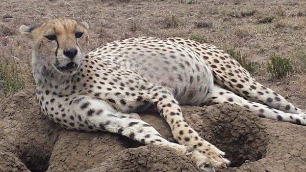 6 Day Tanzania Northern Circuit Safari