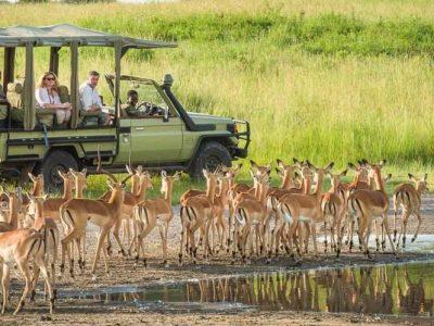 9 Day Southern Tanzania Safari