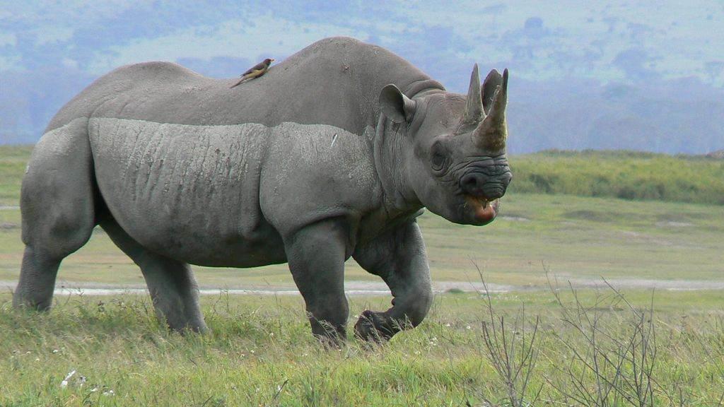 14 Days Tanzania Classic Safari