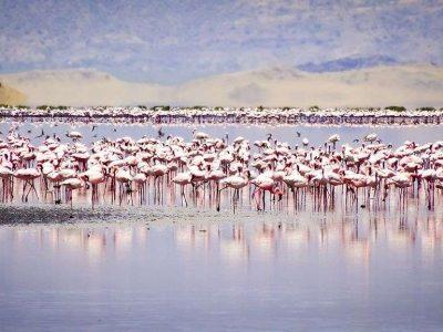 2 Days Lake Natron Tanzania safari