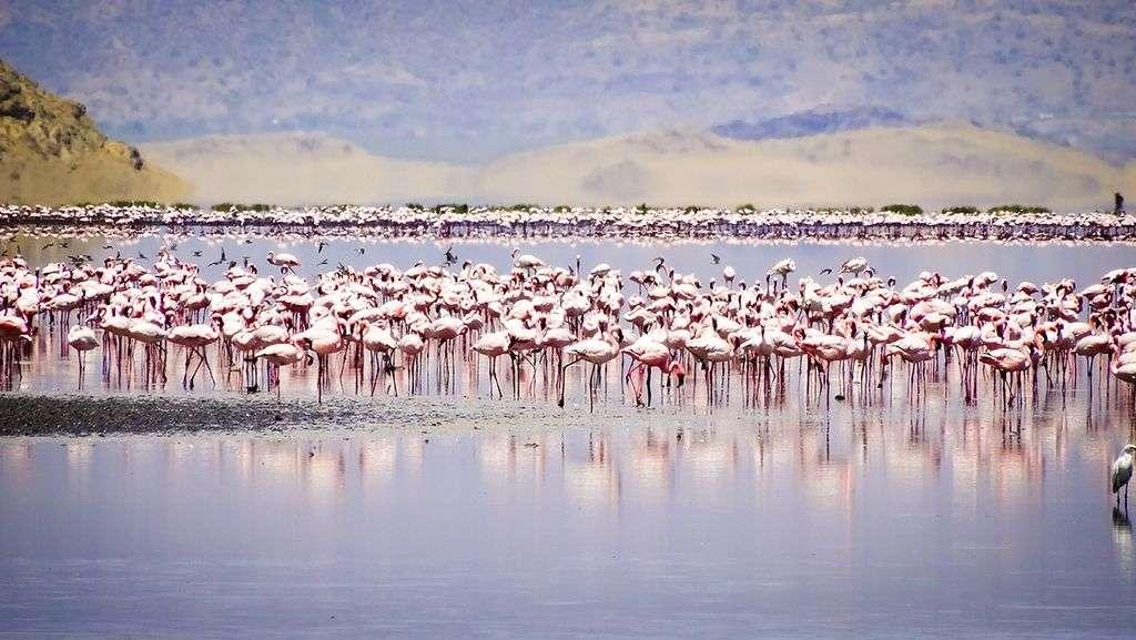2 Days Lake Natron Safari
