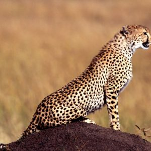 9 Days Tanzania Camping Safari