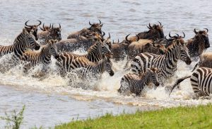 4 Days Tanzania Short Safari