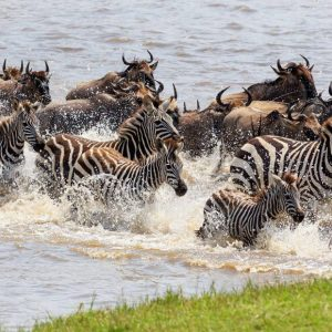 4 Days Tanzania Lodge Safari