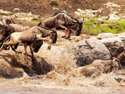 7 Days Serengeti Migration Safari