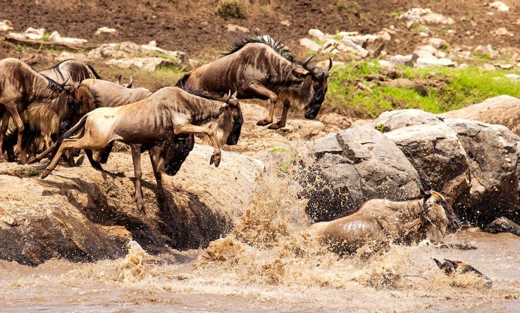 7 Days Serengeti Migration Safari