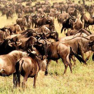 7 Days Tanzania Safari Serengeti