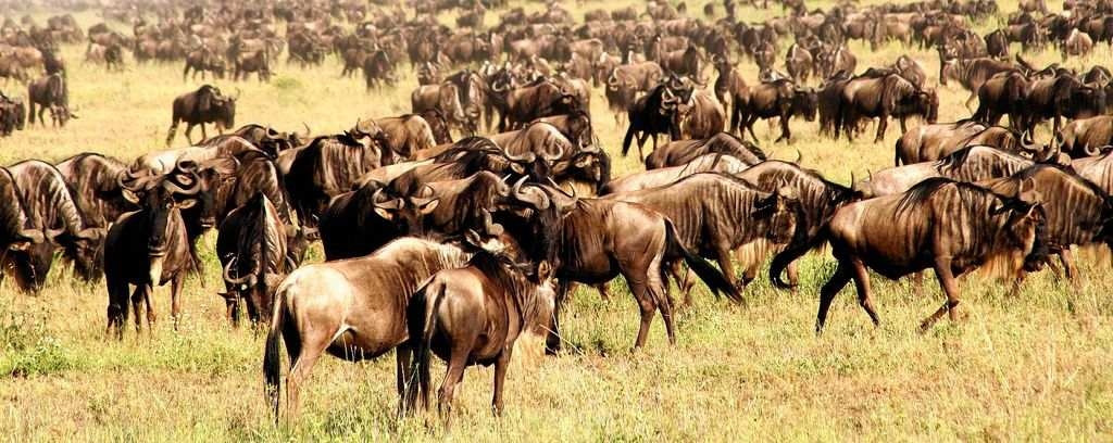 7 Days The Great Migration Serengeti Tanzania