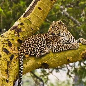 Affordable 6 Days Tanzania Luxury Safari Tour