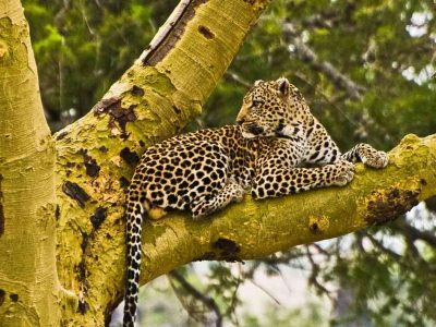 6 Day Tanzania Northern Circuit Safari