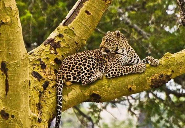 Affordable 6 Days Tanzania Luxury Safari Tour