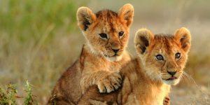 4 Day Ngorongoro & Serengeti Safari