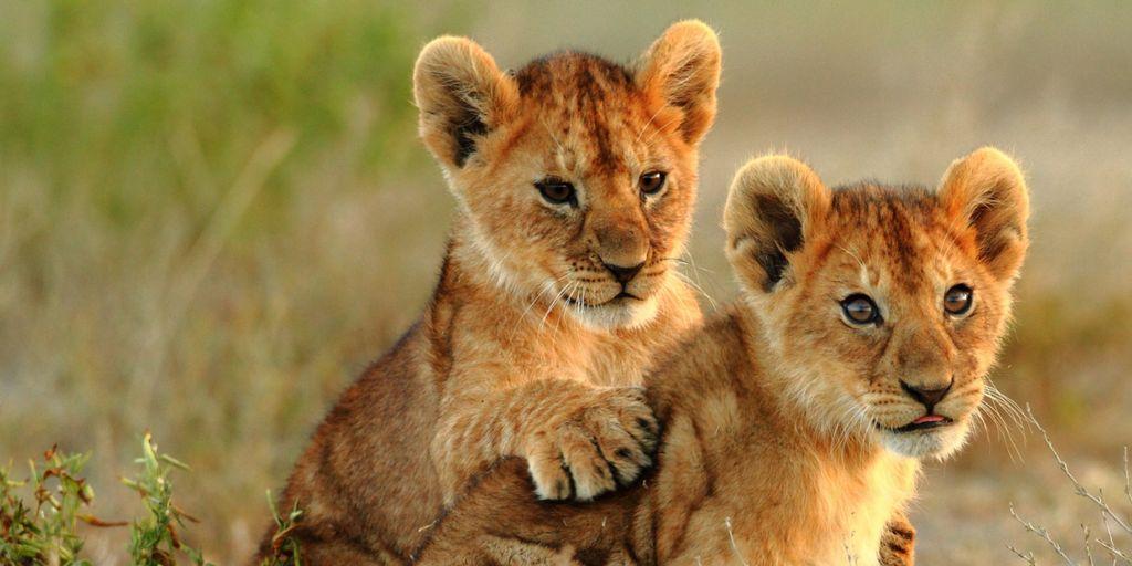 4 Day Ngorongoro Crater Safari