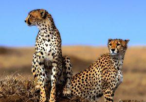 3 Days Ngorongoro and Lake Manyara Safari