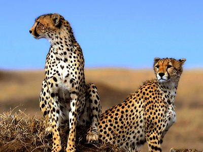 3 Day Ngorongoro Crater Safari