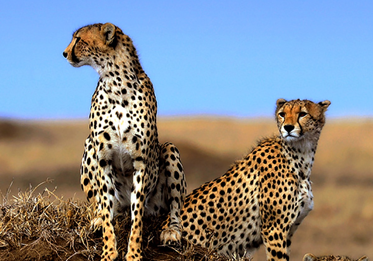 3 Days Ngorongoro and Lake Manyara Safari