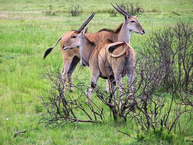 6 Days Tanzania Camping Safari