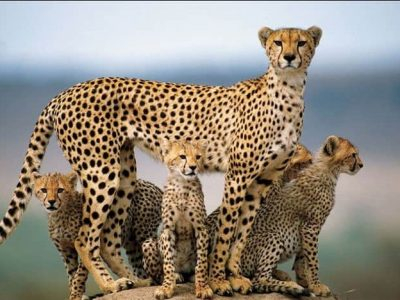 3 Day Serengeti Migration Safari