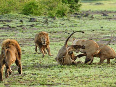 8 Days Wildlife Safari & Beach Holiday