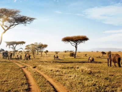 5 Days Tanzania Shared Safari