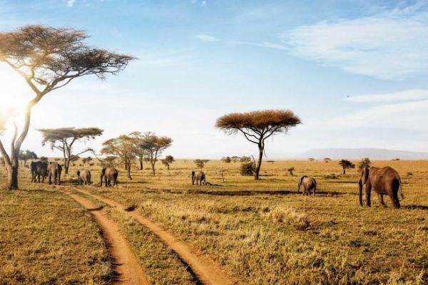 5 Days Shared Safari