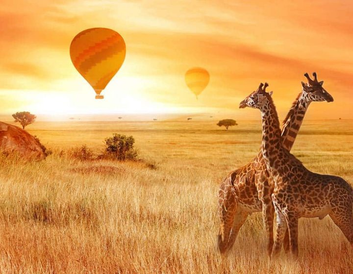 7 Days Tanzania Safari & Beach Holidays