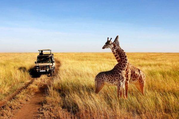 12 Days Classic Safari Kenya & Tanzania