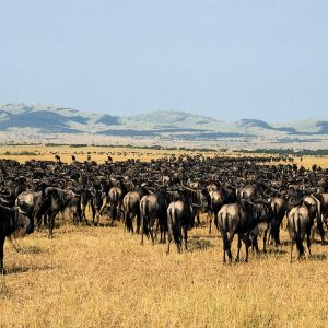 2 days Serengeti safari