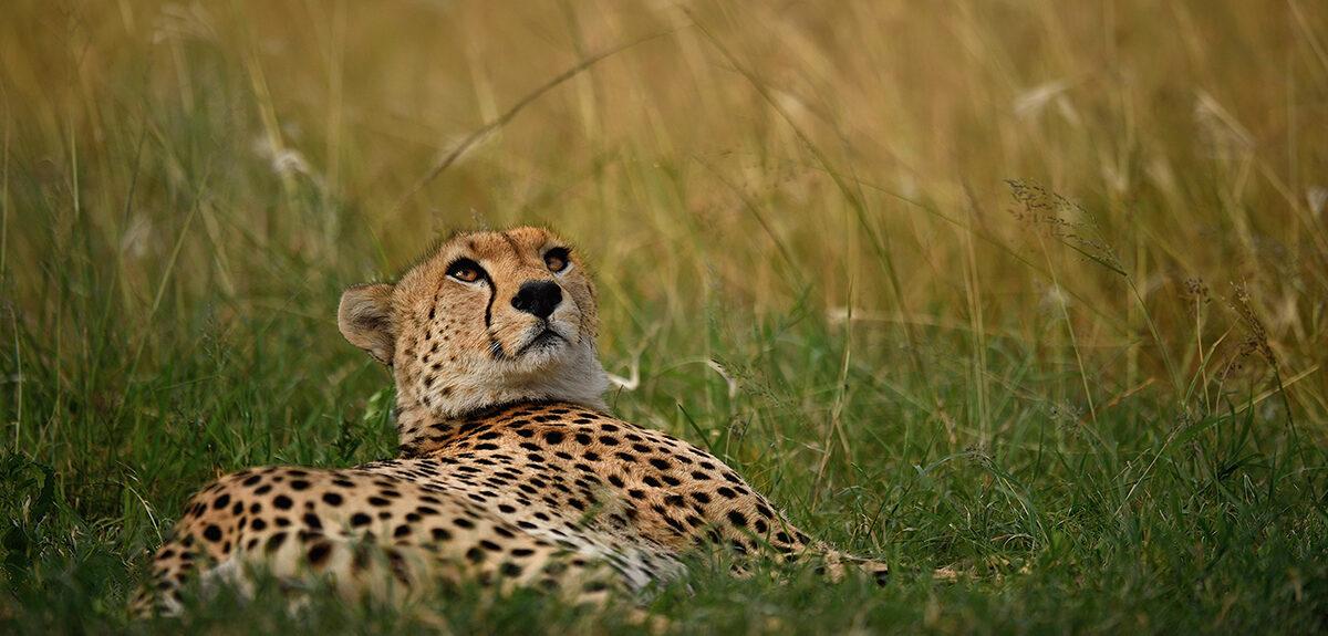 Discover Tanzania 1