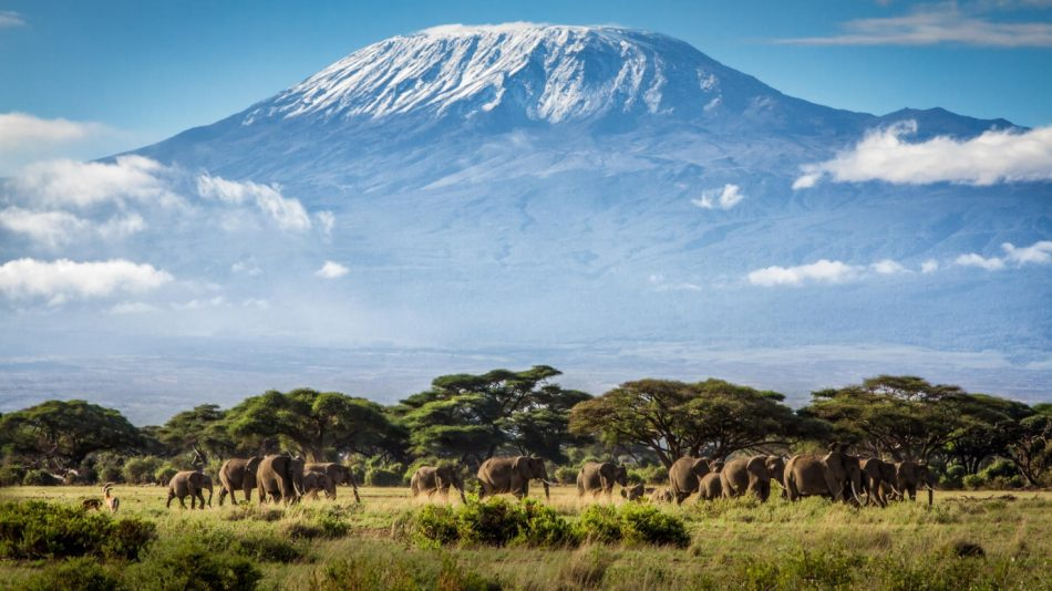 Kenya Tanzania Luxury Safari