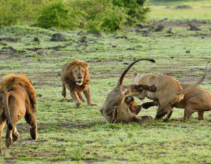 2 Days Affordable Ngorongoro Crater Safari