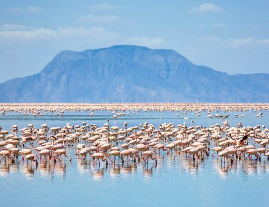 2 Days  Safari to Lake Natron Tanzania