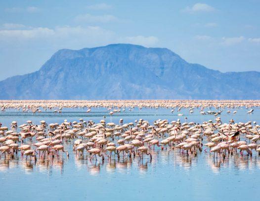 2 Days Safari to Lake Natron Tanzania