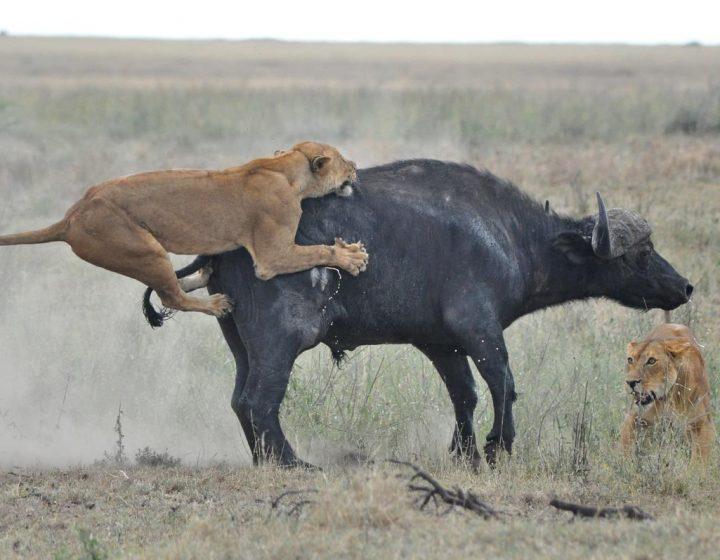 5 Days Affordable Shared Safari