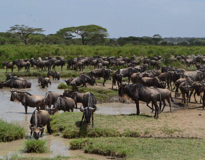 Tanzania Lodge Safari 4 Days