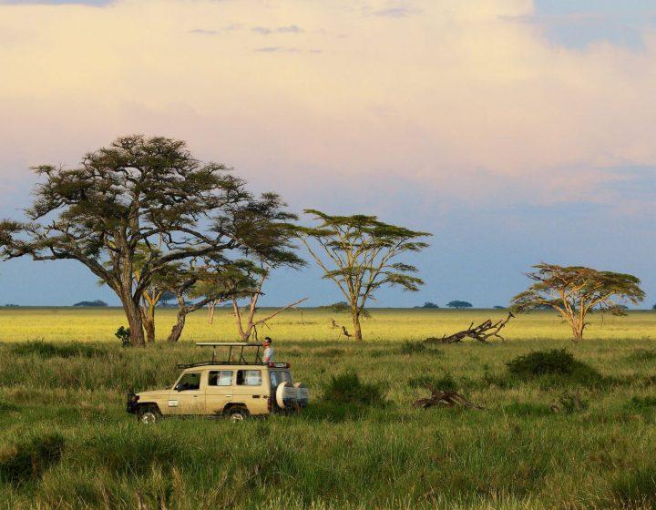 7 day affordable Luxury Safari In Tanzania
