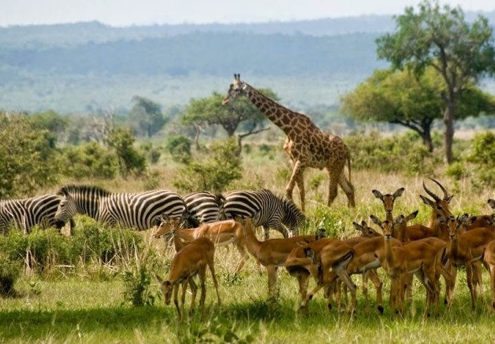 2 Days Mikumi National Park safari