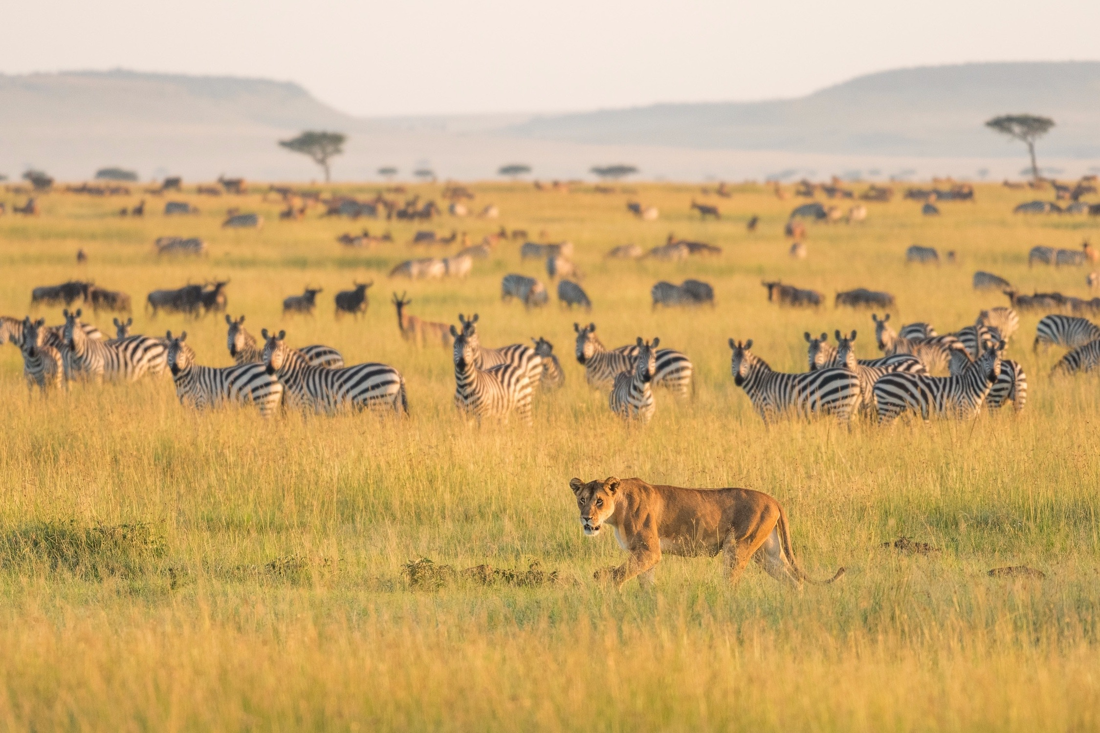 How Much Does A Safari Cost? 1