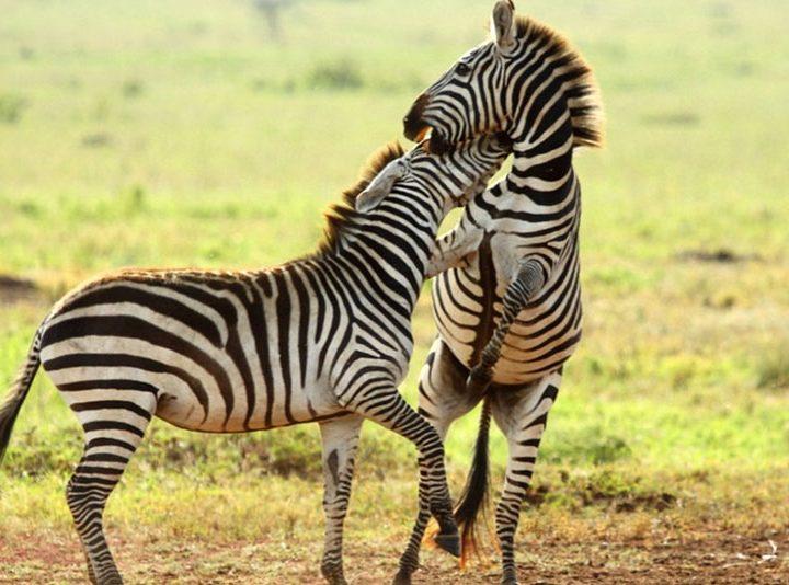 3 Days Safari In Tanzania